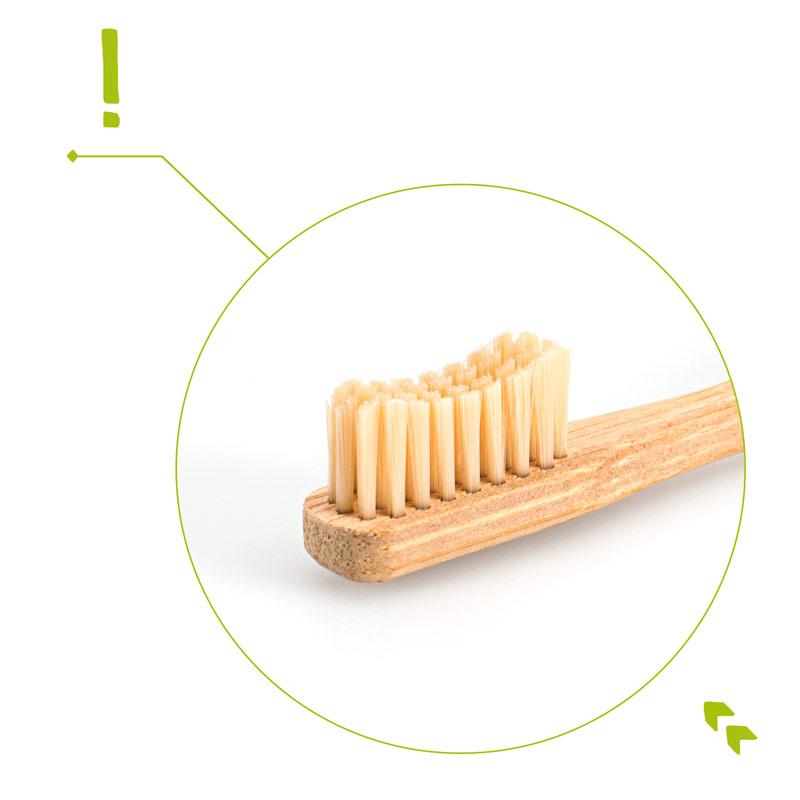 Bambus-Zahnbuerste-Borsten-web